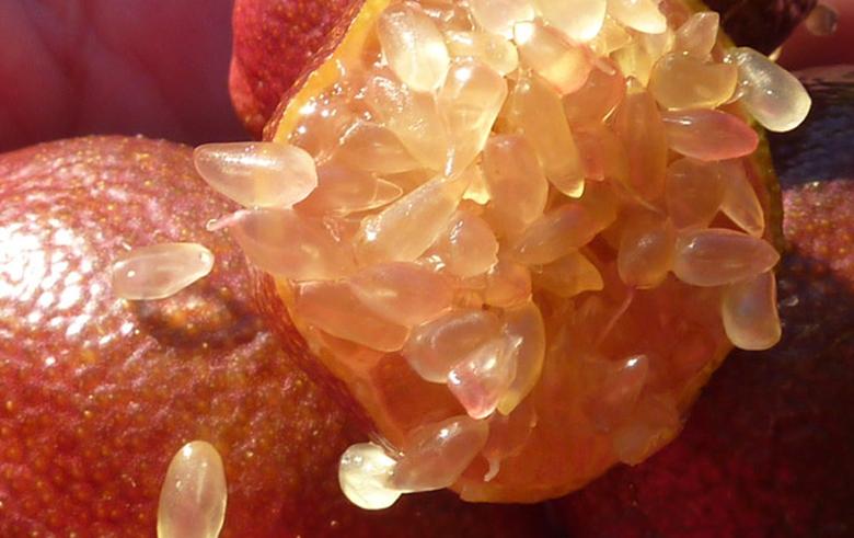 blood-lime_larmes_de_citron_caviar