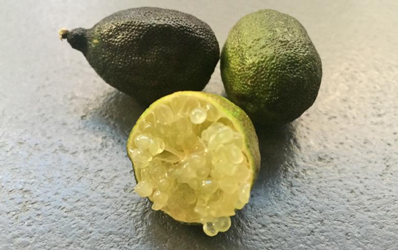citron_caviar_sanguinea_perles_jaunes