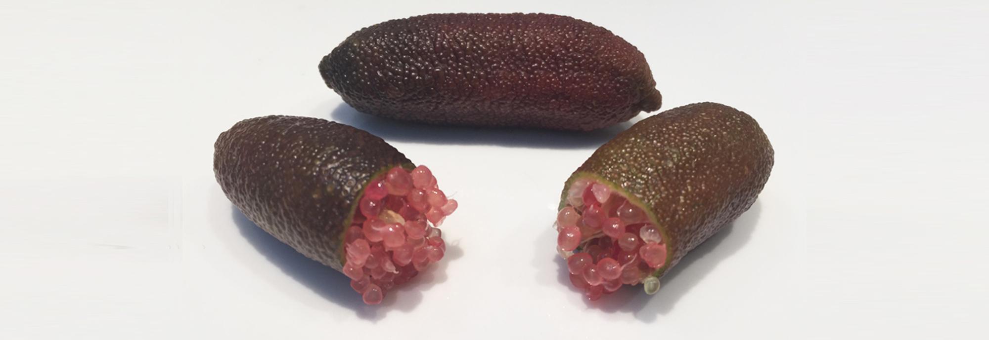 hotspot-citron-caviar-rose