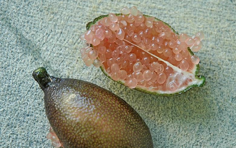 citron_caviar_rose_espagnol_italien