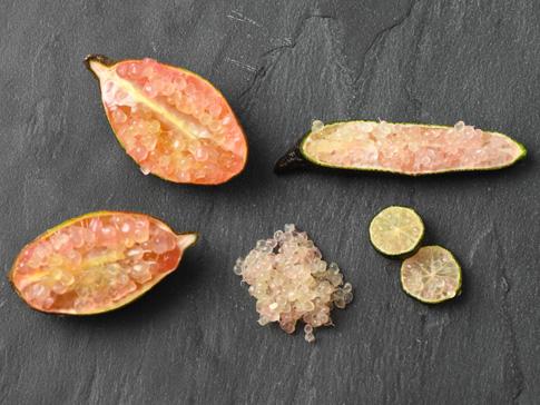Le_Citron_Caviar_les_origines_de_ce_fruit_chic_et_insolite_fruitsathome_