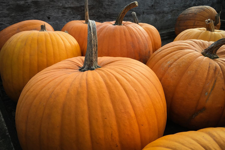 Halloween - 5 infos qui pourraient bien vous surprendre… aaron-burden-QlUwVsIz1CU-unsplash