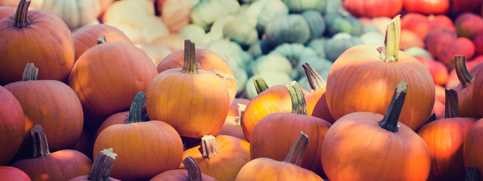 Idées recettes pour un automne plus doux